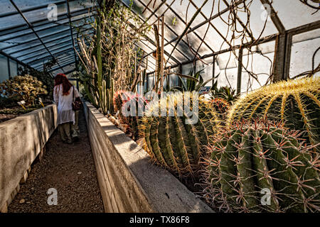 Italy Piedmont Turin Valentino botanical garden - Greenhouse with Cactaceae - Stock Image