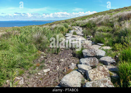 Stones forming a footpath over boggy ground at Hellesveor Cliff, near St. Ives, Cornwall, England, UK - Stock Image