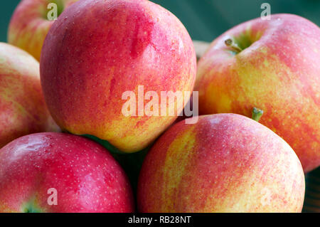 Closeup of freshly washed red and green organic apples. - Stock Image
