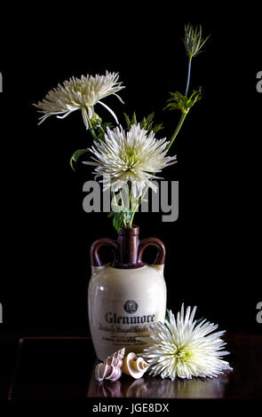 White Mums are displayed in an old Glendale Bourbon Whiskey Bottle with a dark background and Thatcheria and Wentletrap - Stock Image