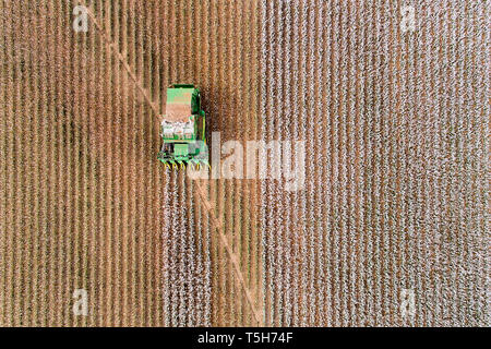 Mechanical cotton harvest picking tractor driving on cotton field riping grown cotton raw material in aerial overhead view - red soils in outback Aust - Stock Image