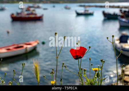 Landscape with colorful spring wild flowers, quiet sea harbor and traditional greek fisher boats - Stock Image