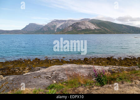 Picture of a fjord in norway, with some stones and a plant in front - Stock Image