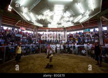 Filipinos watch a cockfight at a cockhouse near Mansalay, Oriental Mindoro, Philippines. - Stock Image