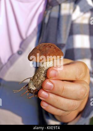 Hand holding small edible mushroom close up - Stock Image