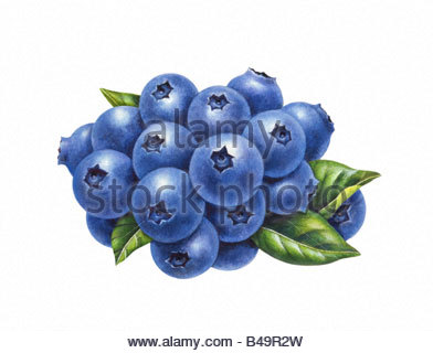 Blueberry Cluster - Stock Image