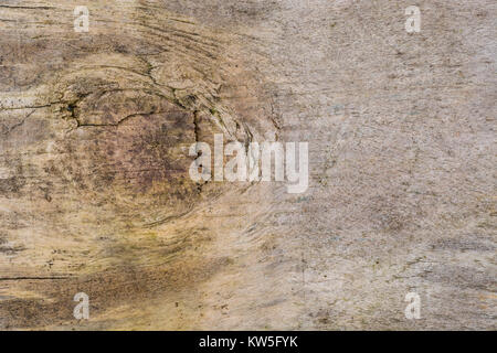 Macro-photo of the surface of a piece of ageing plywood. - Stock Image