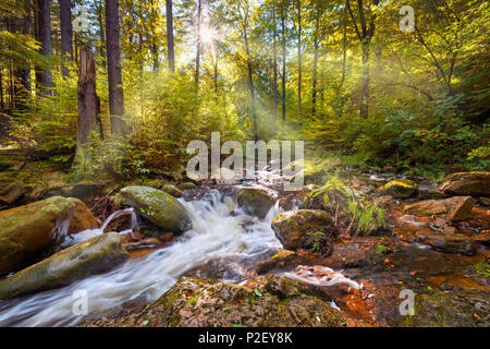 Ilse, Ilse Valley, River, Forest, Sun, Harz, Autumn, Saxony-anhalt, Germany, Europe - Stock Image