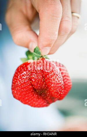 Hand holding strawberry - Stock Image