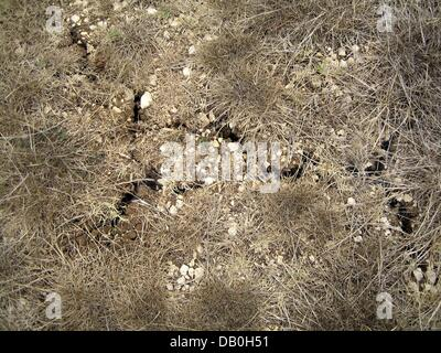 The picture shows the extremely dry earth near Viterbo in Italy, Viterbo, Italy, 21 August 2007. It has not rained - Stock Image