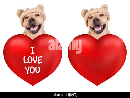 lovely cute smiling dog with big valentine's day heart, isolated on white background - Stock Image