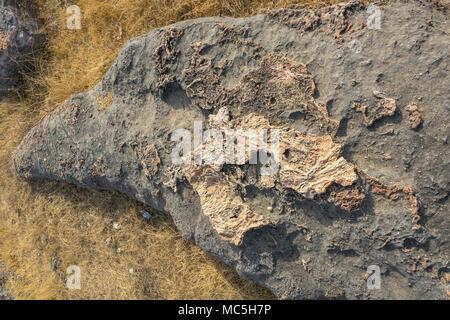 Photo of dinosaur fossils captured Balasinor fossil park, Gujarat,India. - Stock Image
