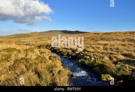 Dartmoor National Park with brook, Devon, England - Stock Image