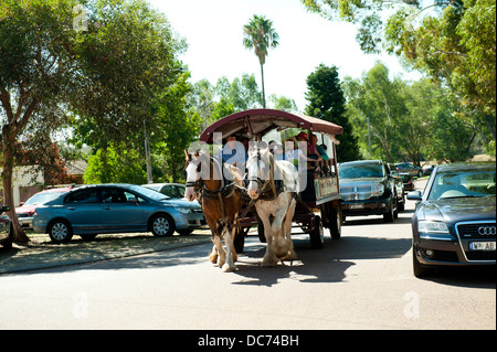 a pair of Draught Horses pulling a wagon through street busy with cars - Stock Image