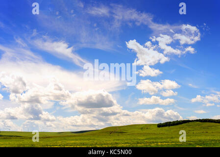 Green rolling pasture of lush grass with horses grazing underneath a blue summer sky with white wispy romantic clouds - Stock Image