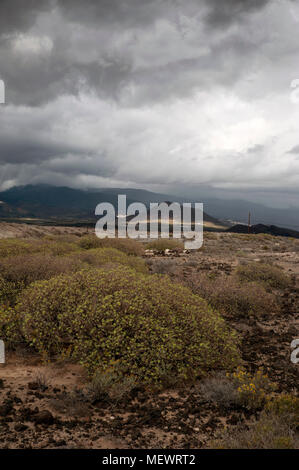 Arid terrain with unusual flora and dramatic clouds above the mountains, Tenerife, Canary Islands, Spain - Stock Image