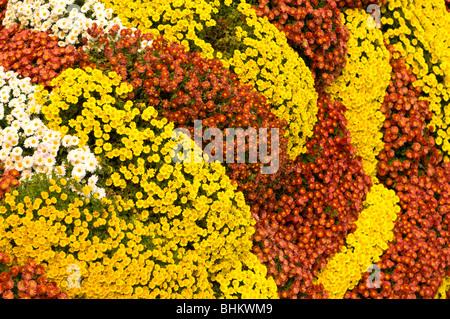 Flower decoration - Stock Image