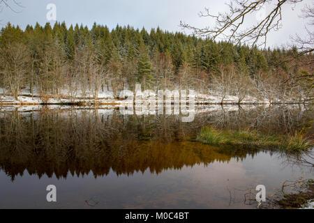 Reflection in Lac de Faux during winter near Faux-la-Montagne, Creuse, Nouvelle-Aquitaine, France - Stock Image