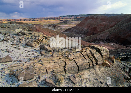 Petrified trees exposed by erosion in Black Forest part of the Painted Desert at Petrified Forest National Park, - Stock Image
