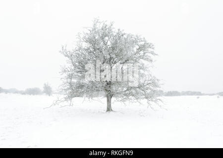 Ice clad tree's in a snow landscape. - Stock Image