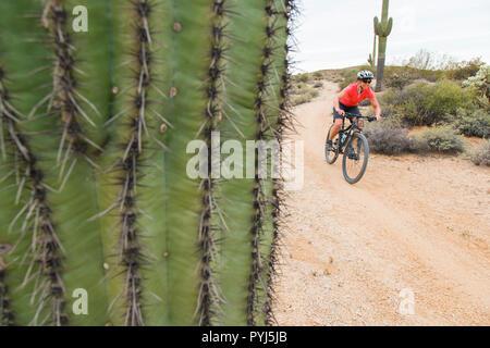Mountain Biking, McDowell Mountain Regional Park, Near Fountain Hills and East of Phoenix, Arizona. - Stock Image