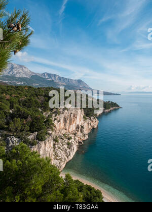 Pine tree forest over hidden beach and calm blue sea in Croatia - Stock Image