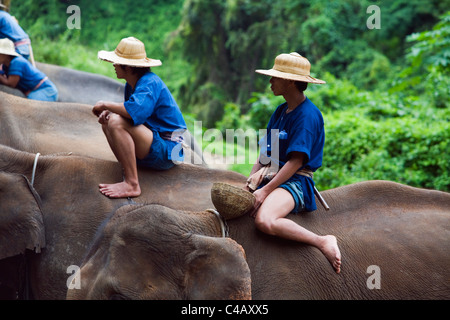 Thailand, Chiang Mai, Chiang Dao. Mahouts sit atop their elephants at the Chiang Dao Elephant Training Centre. - Stock Image