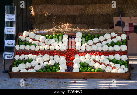 Ardingly Sussex UK 6th June 2019 - A fabulous display of vegetables on display on the first day of the South of England Show held at the Ardingly Showground in Sussex. The annual agricultural show highlights the best in British farming and produce and attracts thousands of visitors over three days . Credit : Simon Dack / Alamy Live News - Stock Image