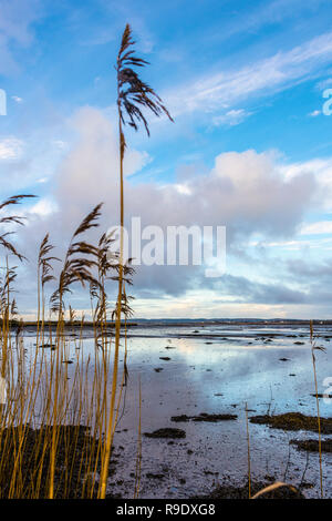 Ardara, County Donegal, Ireland. 23rd December 2018. Low tide on the north-west coast seen through reedbeds on a calm, bright morning. Credit: Richard Wayman/Alamy Live News - Stock Image