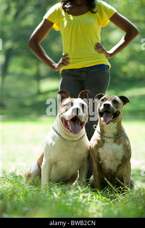 Two dogs with their owner - Stock Image