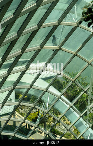Window cleaner on outside of Cloud Forest building, Gardens by the Bay, Singapore - Stock Image