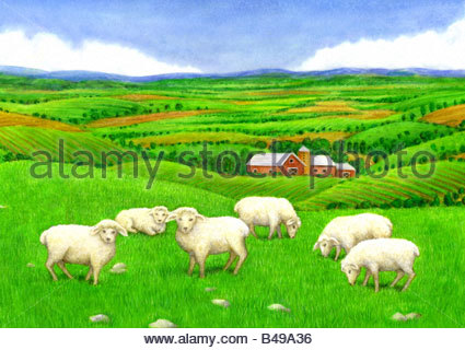 Farm with Sheep - Stock Image