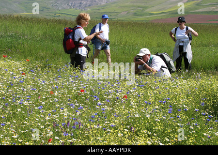 hikers in the Spectacular annual Wildflower display,Piano Grande at Castelluccio ,in the Sibillini National Park,Le - Stock Image