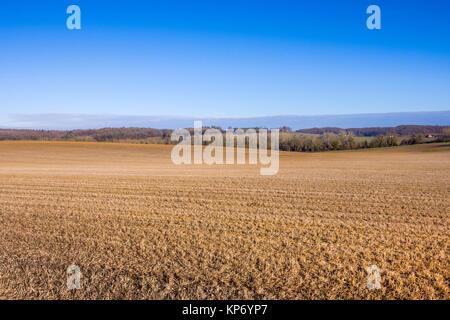 Lucerne / Alfalfa crop after third harvest becomes 'green manure' - France. - Stock Image