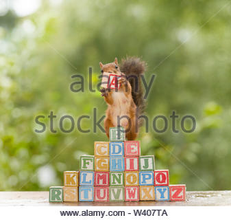 red squirrel holding a letter - Stock Image