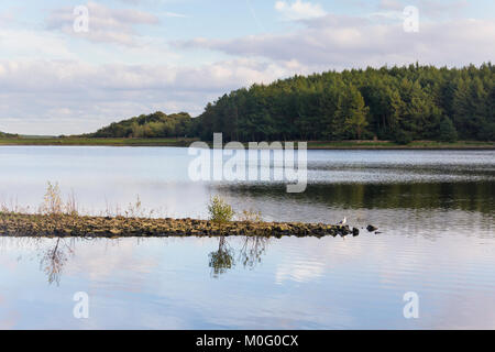 Turton and Entwistle reservoir, Lancashire, looking south-east from the north-west shore. The reservoir dates from - Stock Image