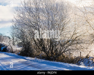 A tree covered in hoar frost along a snowy country lane in Wiltshire. - Stock Image