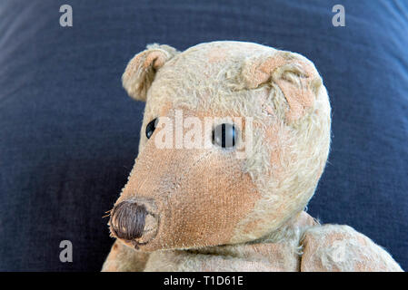 German Ted very elderly much loved and worn German teddy bear, c. 1914 showing fine pointed face profile - Stock Image
