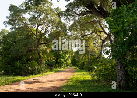 A dirt road in North Pantanal, Brazil - Stock Image