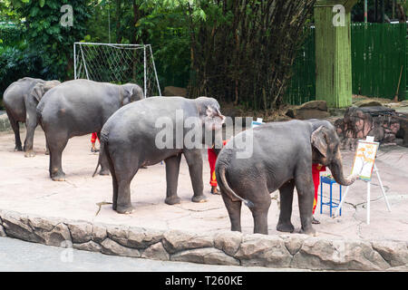 The show is elephant drawing colorful on paper. - Stock Image