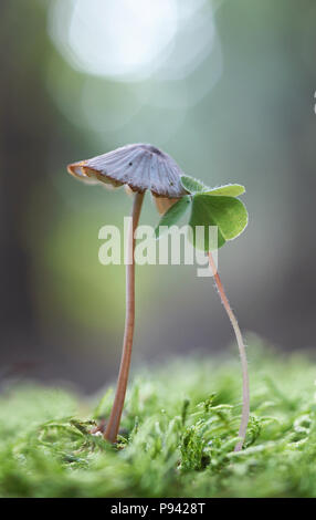 Forest Couple - Stock Image
