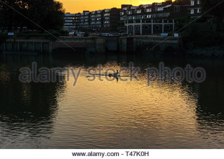 Person rowing along the thames at sunset near Richdmond - Stock Image