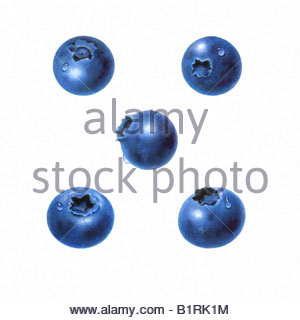 Blueberries - Five Separate - Stock Image