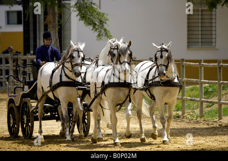 Horse drawn carriage at Yeguada de la Cartuja stud, Hierro del Bocado, Jerez de la Frontera, Andalucia, Spain - Stock Image