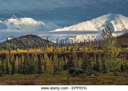 The Alaska range in Denali national park - Alaska (USA) - Stock Image