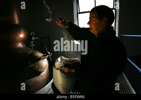 Anthony Wills feels the barley prior to production starting at the Kilchoman Distillery  on the island of Islay - Stock Image