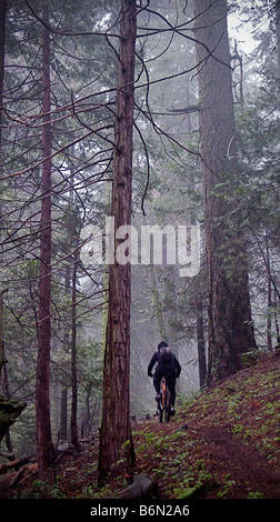 mountain biker on Bear Creek Trail, Camp Nelson, Sequoia, California - Stock Image