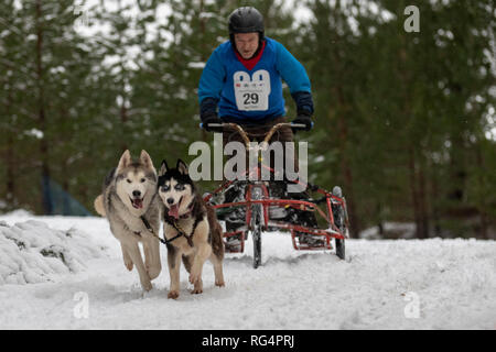 Aviemore, Scotland, UK  - January 27th, 2019: A runner in the Siberian Husky Club of Great Britain 36th Aviemore Sled Dog Rally 2019 Credit: AC Images/Alamy Live News - Stock Image