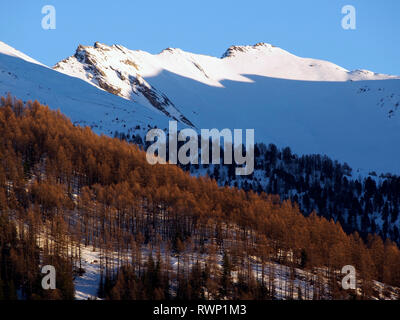 Evening light on forest and crest south of Aiguilles, Parc regional du Queyras, French Alps - Stock Image
