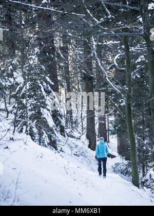 Woman hiking through snowy forest in Valley of Yach, Elzach, Black Forest, Baden-Württemberg, Germany - Stock Image